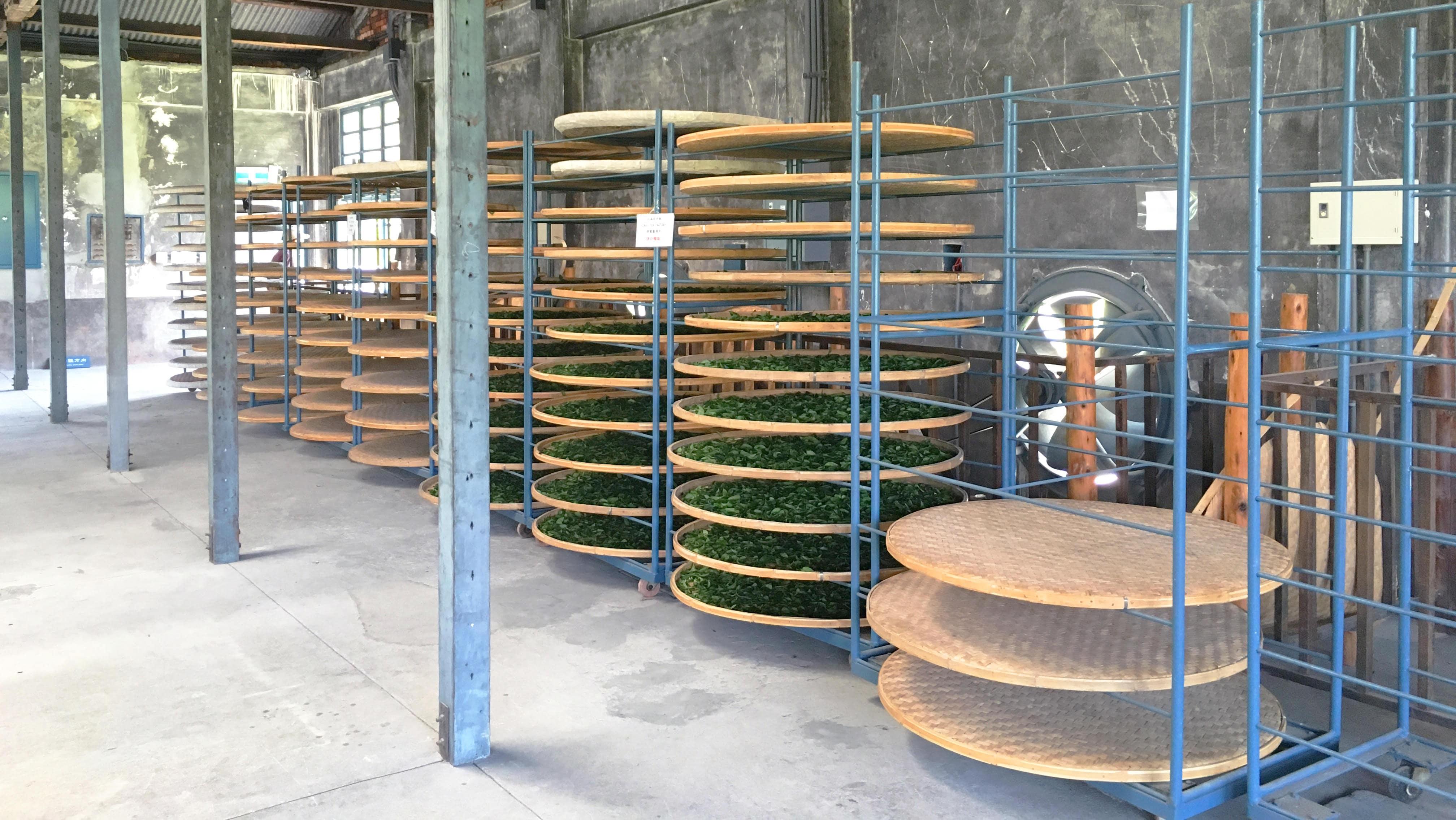 大溪老茶廠