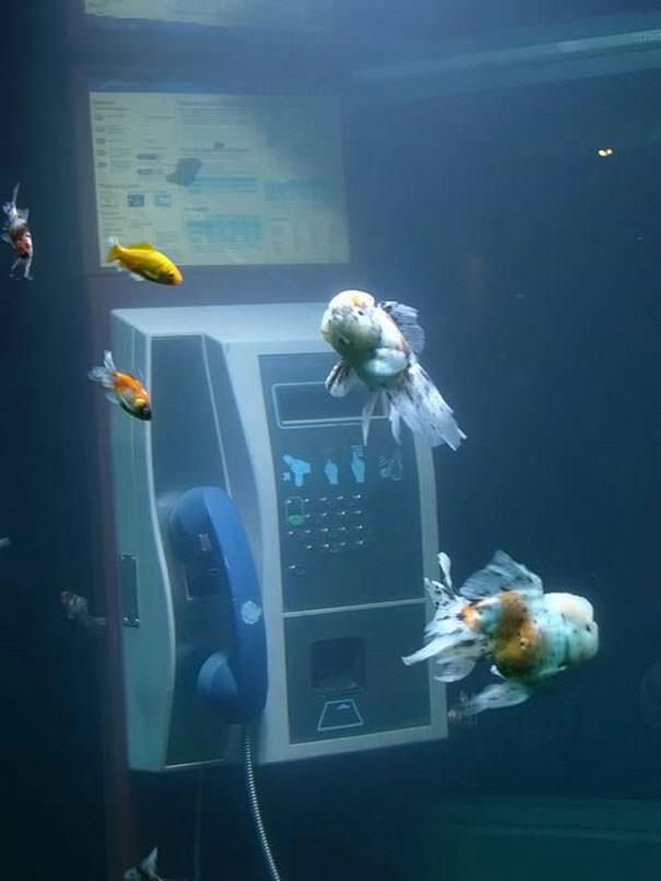 creative-aquariums-8-2